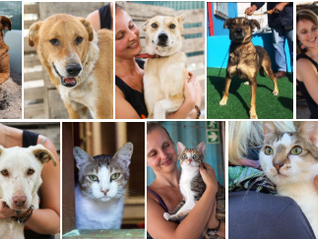 Stray dogs saved thanks to the public and partners