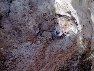'Animals Deserve Life' Says Man Who Once Had Dog Buried Alive