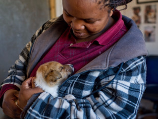 Mdzananda Animal Clinic enters its new Financial Year Our progress, challenges, joys and hopes