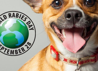 Join usin the fight against Rabies -  We will vaccinate 200 dogs for World Rabies Day -  Sponsor on
