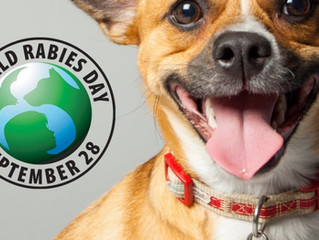 Join us in the fight against Rabies -  We will vaccinate 200 dogs for World Rabies Day -  Sponsor on