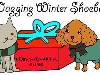 Pack a Wagging Winter Shoebox to keep a pet warm this winter