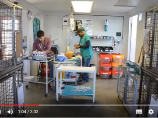 My experience visiting the Mdzananda Animal Clinic