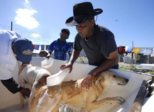 The Two Oceans Aquarium supports the Mdzananda Animal Clinic