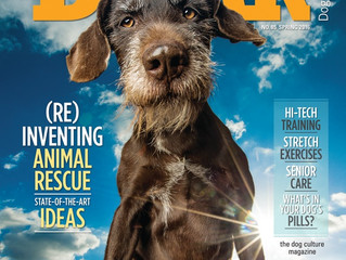 12 000 Pets Campaign featured in The Bark Magazine