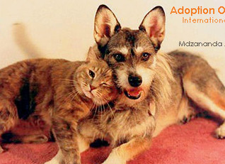 Join us for an Adoption Open Dayon International Homeless Animal Day