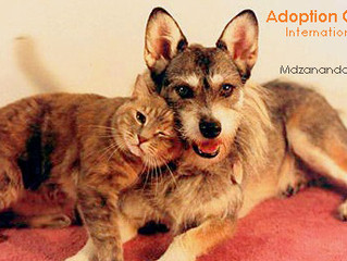 Join us for an Adoption Open Day on International Homeless Animal Day