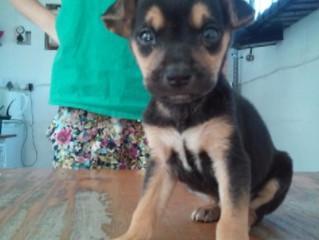 Puppy 14