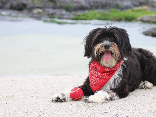 Join in for Walkies at Ace`s 4th Adoptaversery Beach Walk