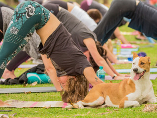 Downward Facing Adopt a Dog is back