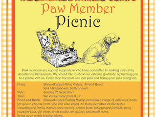 Join us for a picnic as we celebrate 20 years!