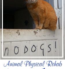 Animal Physical Rehab sponsors Zen!