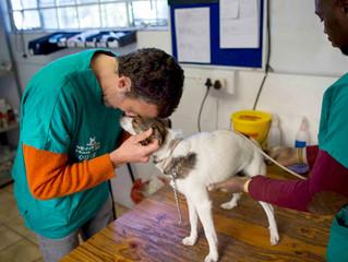 A Sunday morning at the Mdzananda Animal Clinic