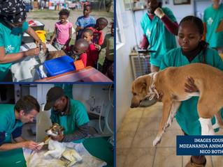 Khayelitsha veterinary clinic brings hope and happiness to community