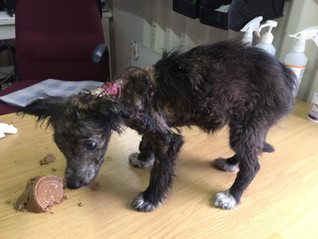 Half blind, mangey pup gets dumped on Christmas - now living the best life