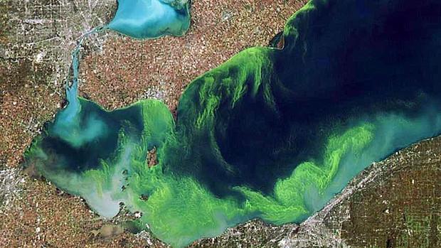 wdr-620-blue-green-algae.jpg