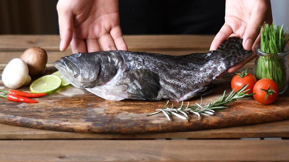 LACTOSEAFOOD® Line Grouper (Whole)