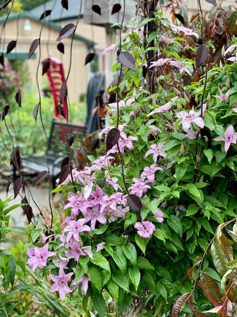 summer garden lanthier winery 22.jpg