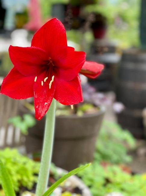 summer garden lanthier winery 16.jpg