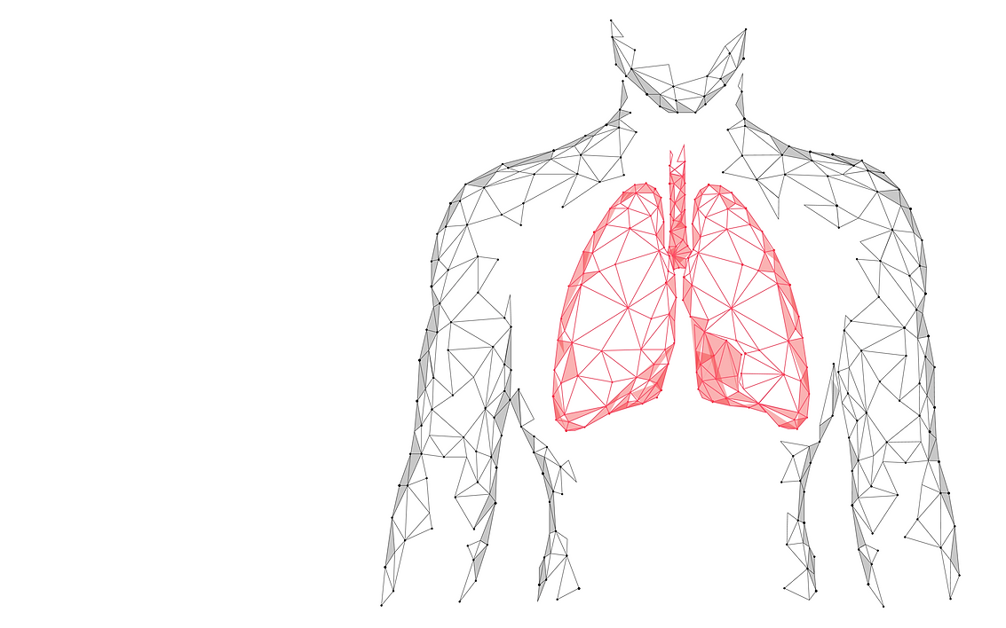 Poly Lungs.png