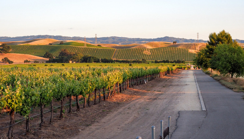 livermore-vineyards.jpg