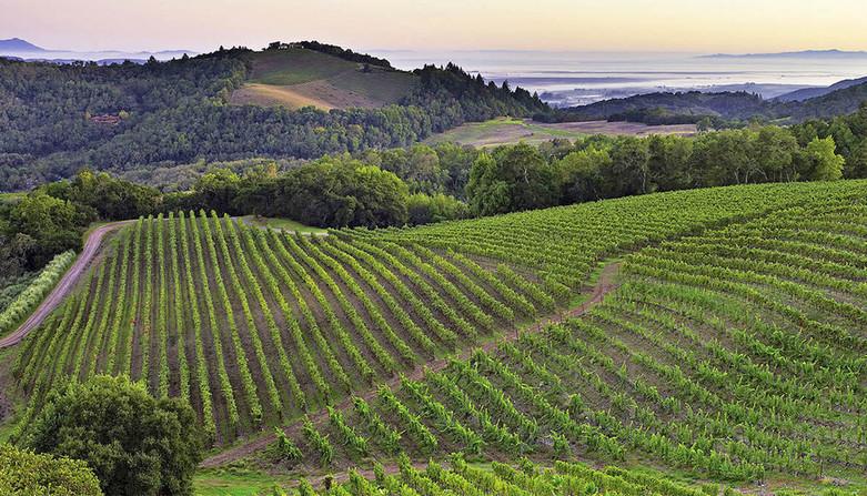 Livermore-Valley-Wineries.jpg