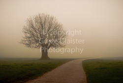 Lone Tree by Grace Glaister
