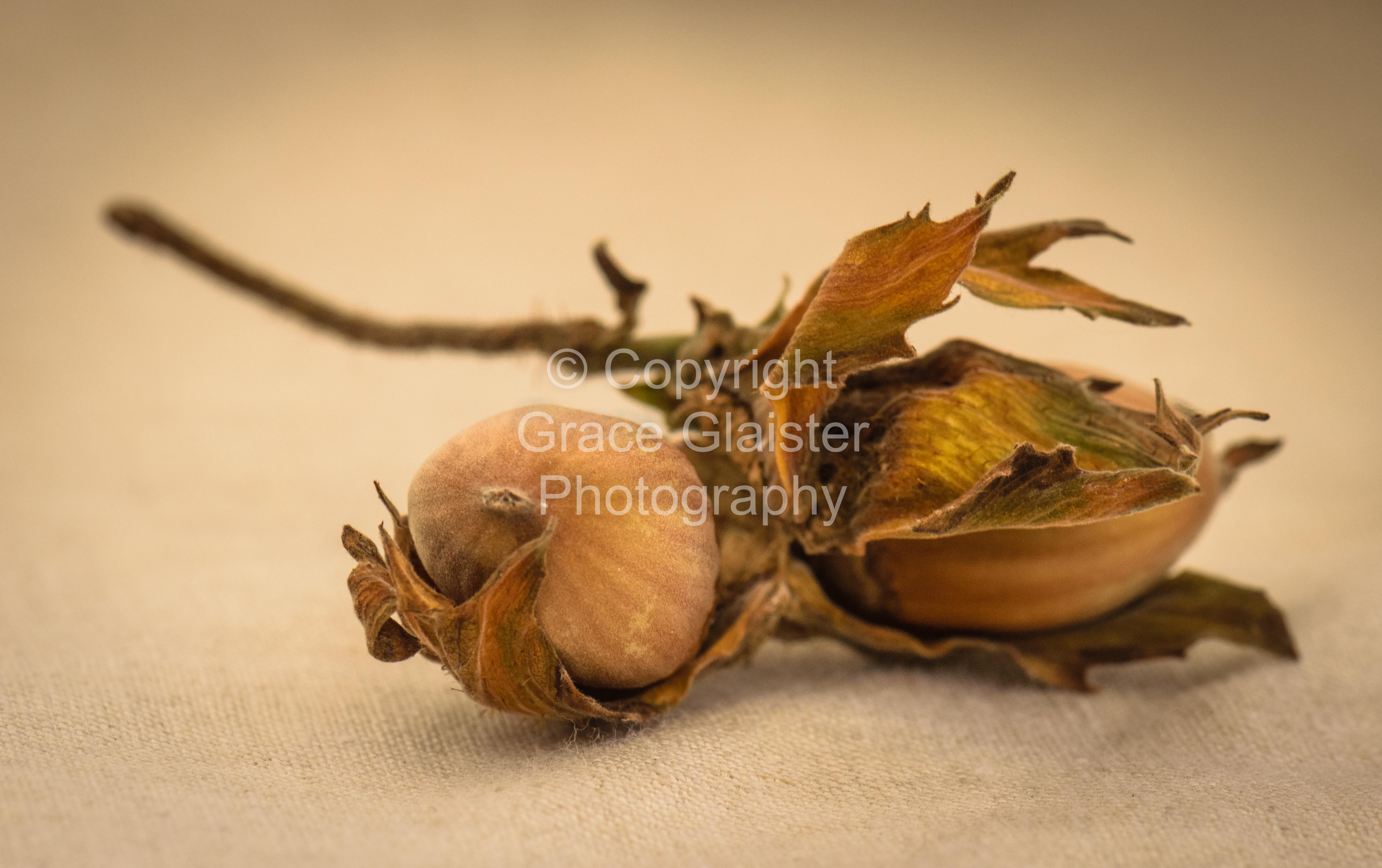 Hazelnuts by Grace Glaister