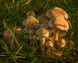 Toadstools by Grace Glaister
