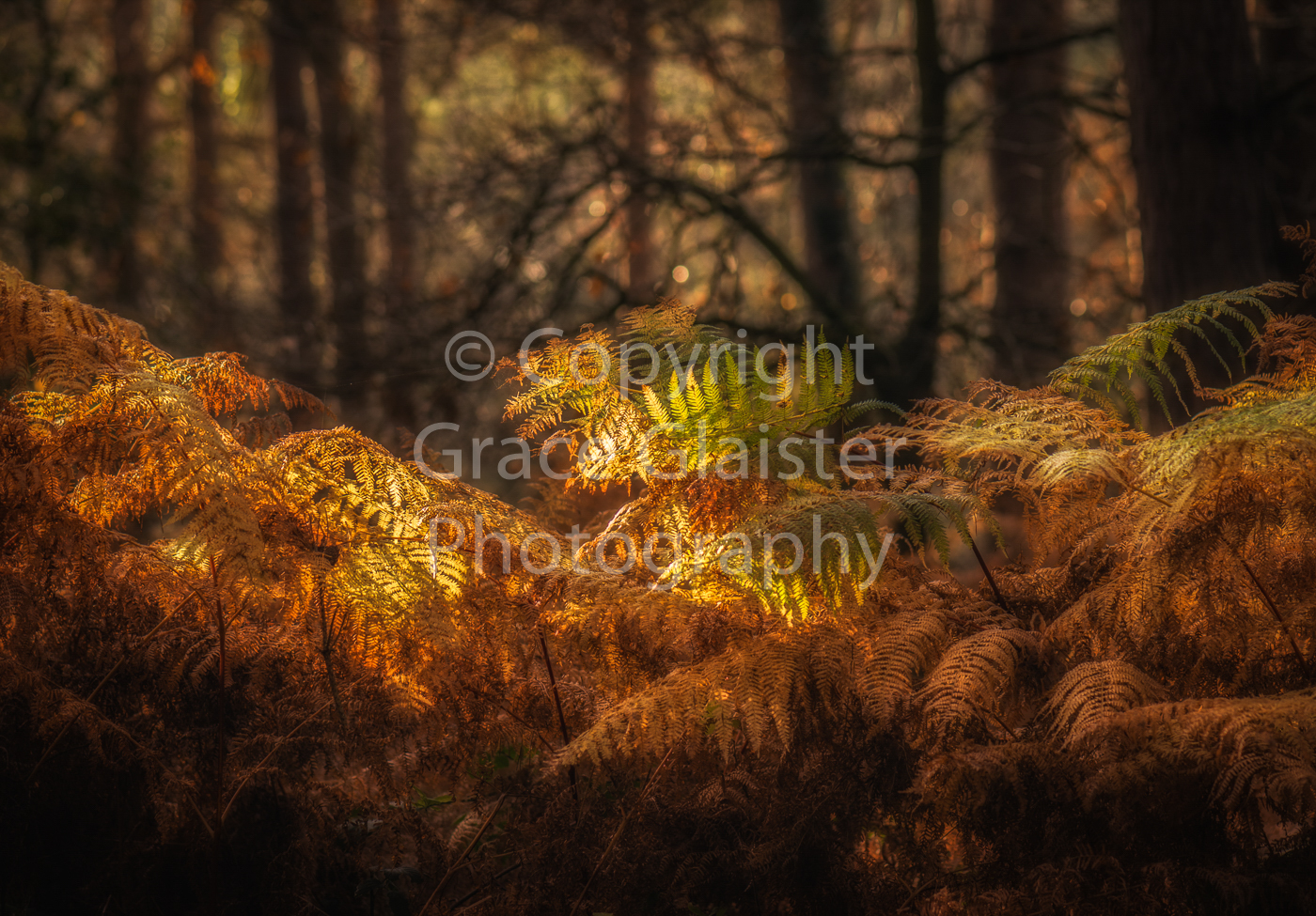 Last of the green by Grace Glaister