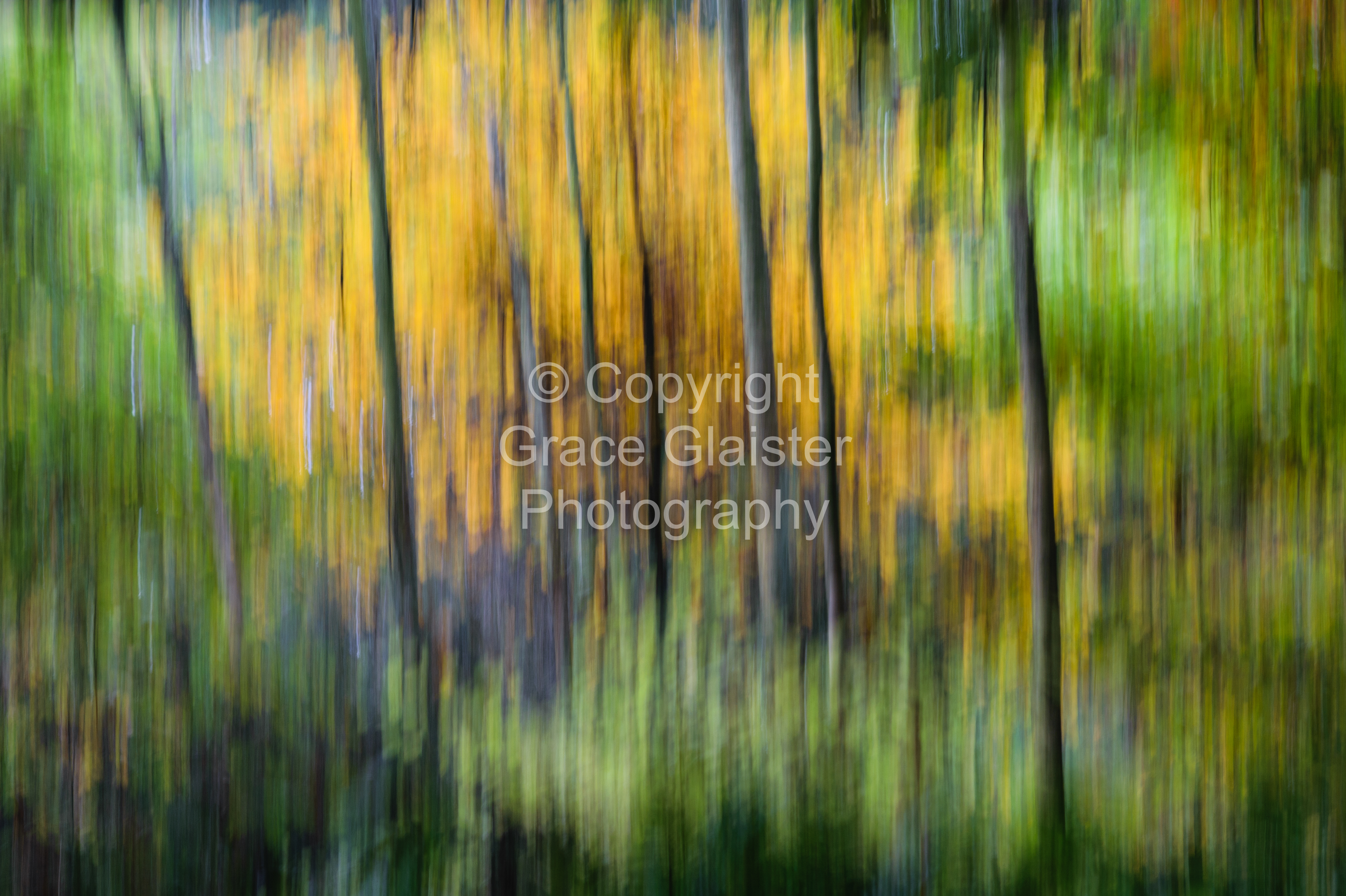 Autumn Trees by Grace Glaister