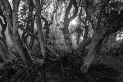 Tree Roots by Grace Glaister