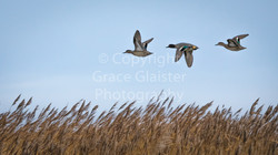 Teal by Grace Glaister