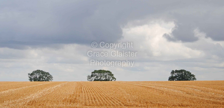 Three Trees by Grace Glaister