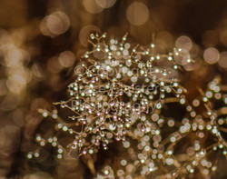 Nature's Fairy Lights by Grace Glaister.