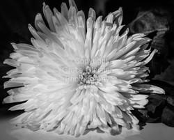 Flower by Grace Glaister