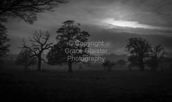 Felbrigg Mist by Grace Glaister