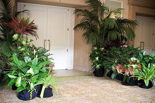 Foliage Entryway