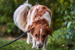 rettungshundesstaffel-hund-fotograf-ian-