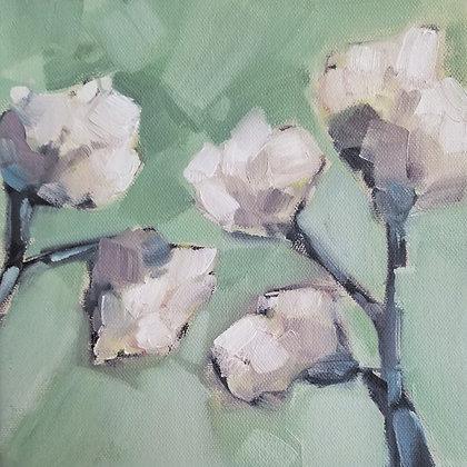 Cotton Blooms