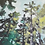 Thumbnail: Top of Muir Woods