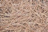 Pine Straw Slash