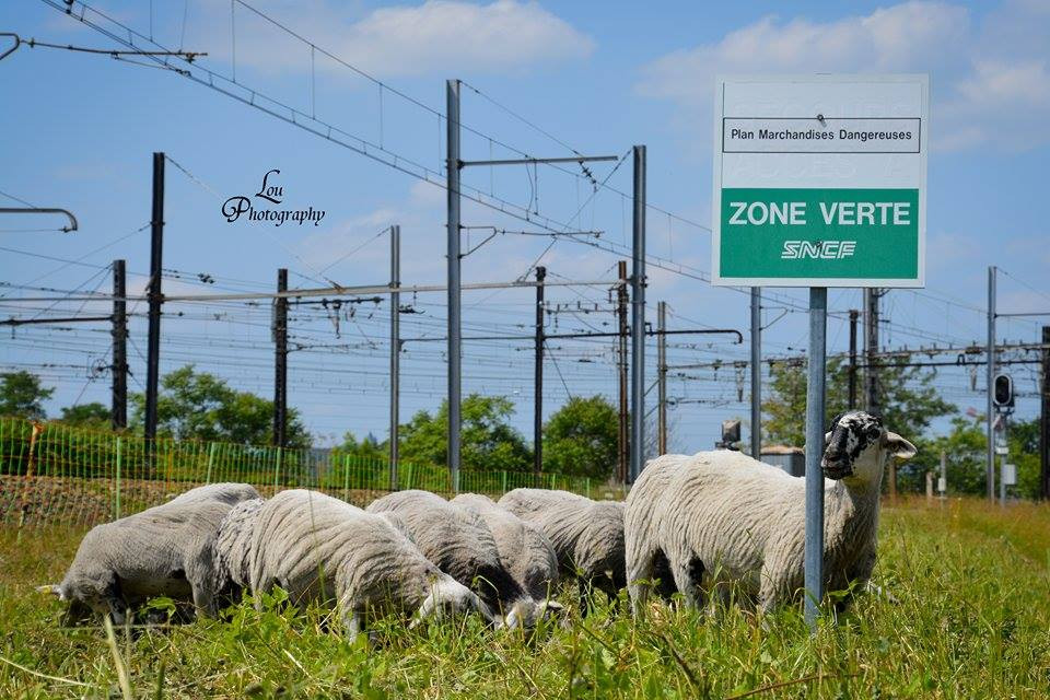 moutons dijon panneau.jpg
