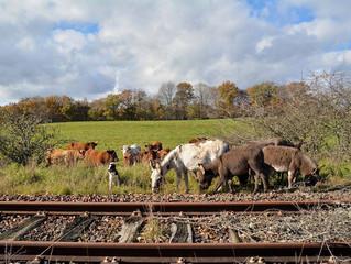 Ecozoone et la SNCF, un partenariat pour l'environnement !