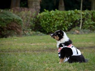 Jaizzie, concentrée pour son premier foot dog!