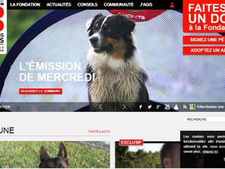 Les chiens d'Ecozoone à la une dans 30 Millions d'Amis !