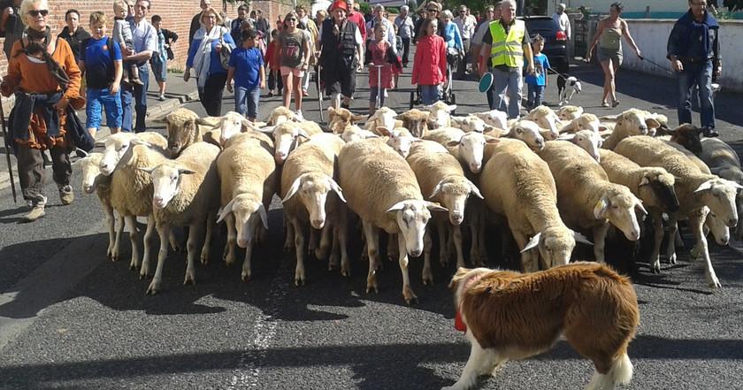 30 moutons 2 - Copie.jpg