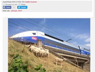 """Gazetteinfo """"De l'écopaturage le long des voies ferrées de Dijon"""""""