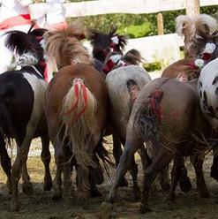 poneys beussent2.jpg