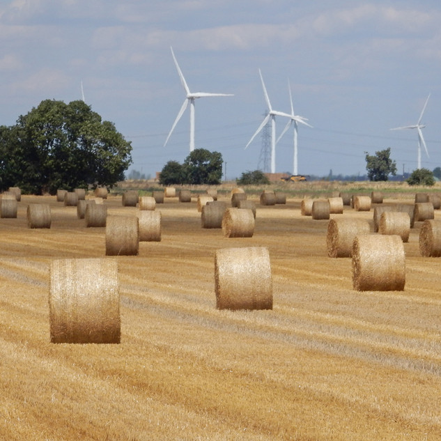 Wind and Field Farms